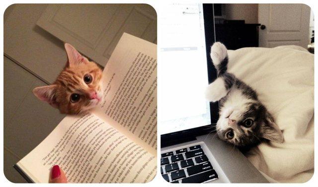 gatos.exames